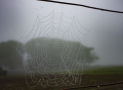 Fog Collection: An Innovative Harvest From Irrigation Suppliers