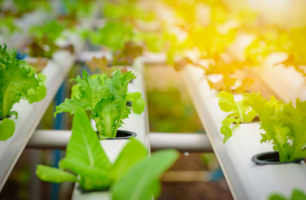 Hydroponics could be a significant step towards flourishing farming in UAE