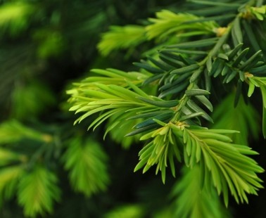 Features of Real Christmas Tree When You Purchase Online
