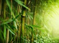 Nicaragua and the SDGs – EcoPlanet Bamboo's Contribution to Achieving National Targets