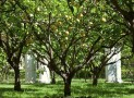 Find Out How Trees Grow