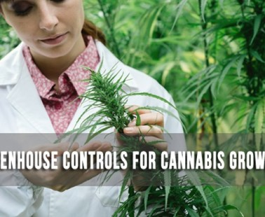 An Overview: Greenhouse Controls For Cannabis Growers