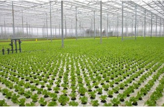 10 Advantages Of Hydroponic Farming