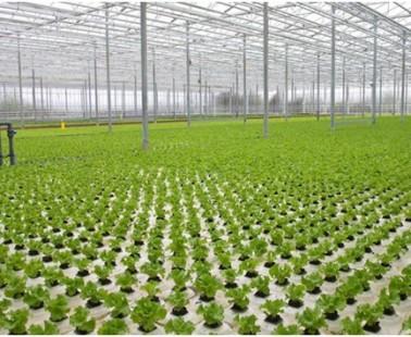 10 Advantages Of Hydroponic Farming