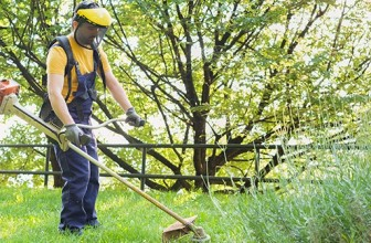 Top 5 Benefits of Using Arboriculture Services