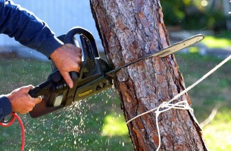 Tree Removal Service And Its Need