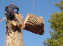 Preserve the Integrity with Timely Tree Trimming
